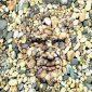 cara entre las piedras
