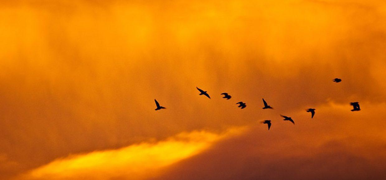 Aves-cambio-climatico
